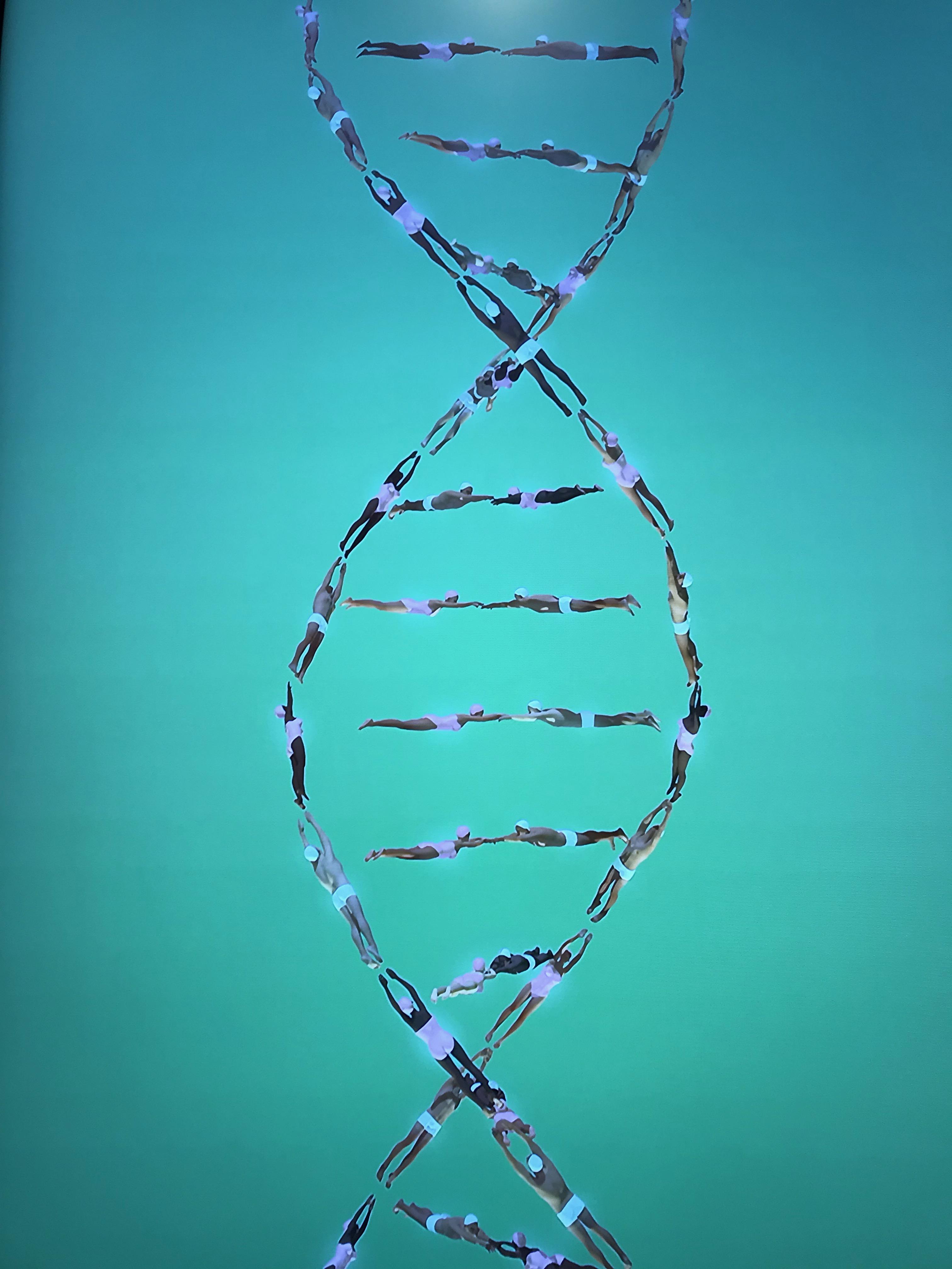 DNA Musee de Homme